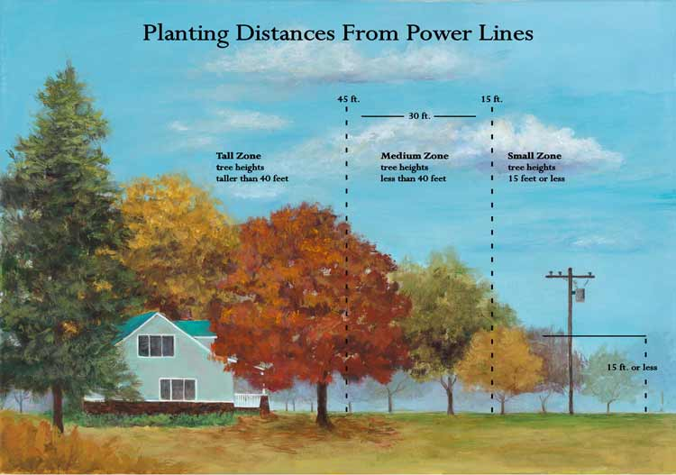 There are three main safe planting zones around power lines: small, medium and tall